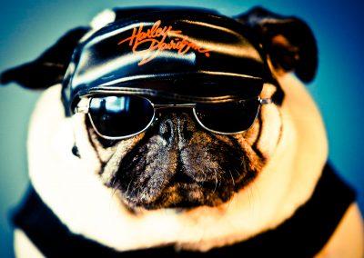 Pruts Harley